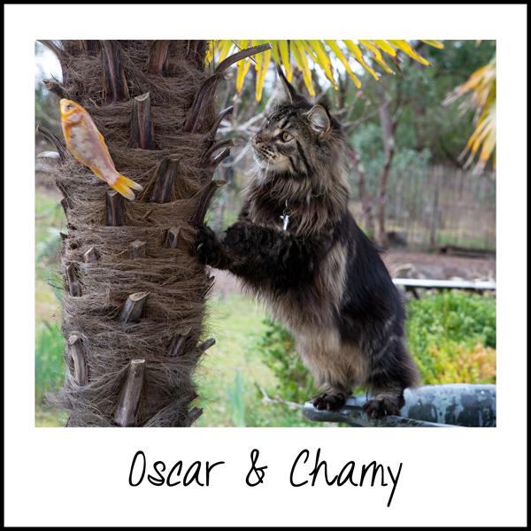 couv-Oscar-Chamy