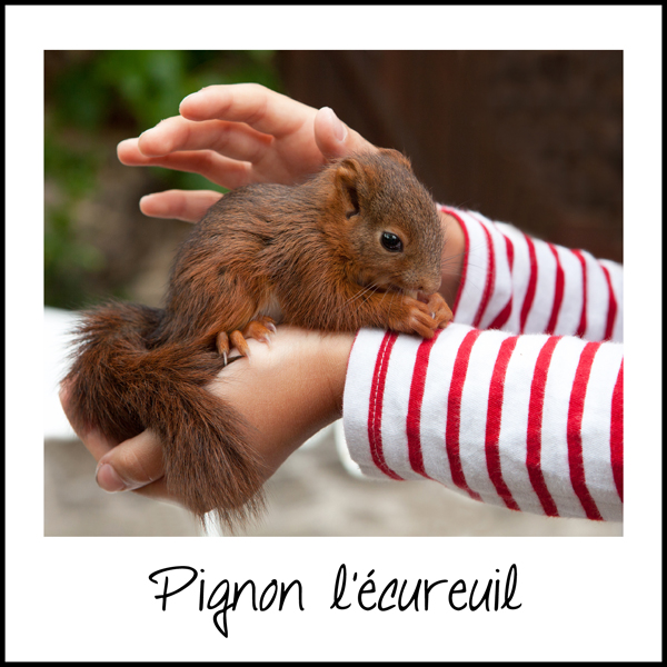 couv-Pignon